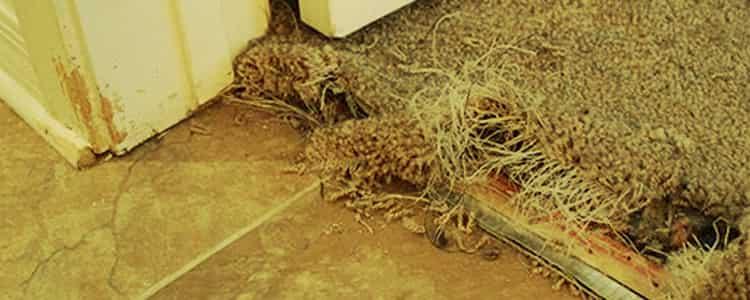 Best Pest Control Balmain